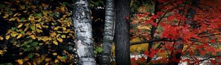 forests-fields-header-9033-1024x300