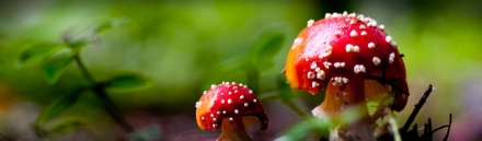 red-mushrooms-and-nature-website-header