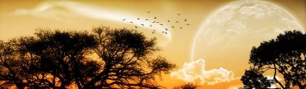 unique-moon-birds-fantasy-abstract-nature-header