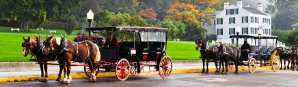 beautiful-tourism-horses-drawn-carriages-website-header