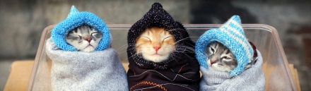 funny-kittens-and-cold-day-website-header