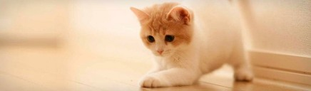 cute-white-cat-playing-on-floor-web-header_size-1024x300