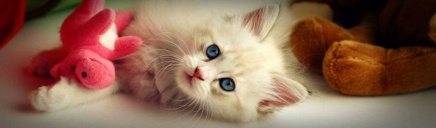 cute-white-cat-playing-with-soft-toys-web-header_size-1024x300