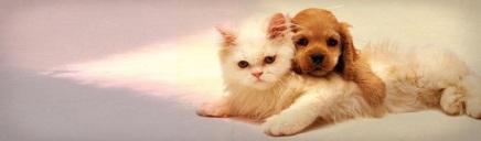 cute-golden-puppy-hugging-white-cat-web-header_size-1024x300