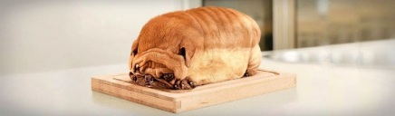 amazing-cute-funny-chinese-dog-loaf-header_size-1024x300
