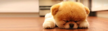 amazing-cute-golden-puppy-in-home-web-header_size-1024x300