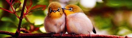 colorful-love-birds-website-header_size-1024x300