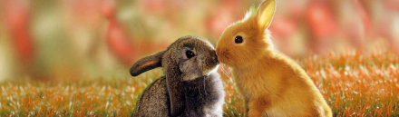 awesome-couple-of-bunnies-lovers-web-header_size-1024x300