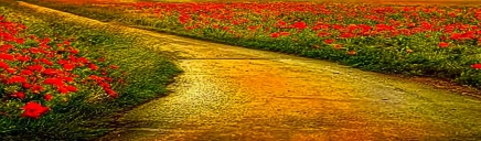 path-road-and-flowring-field-website-header_size-1024x300