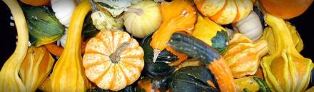 tropical-vegetables-header